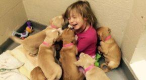 Les refuges pour animaux et le bénévolat, c'est très intéressant!
