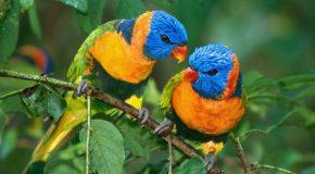 Des oiseaux et rien que des oiseaux, parce qu'ils sont magnifiques!