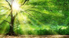 Douce musique et superbes clichés de forêts