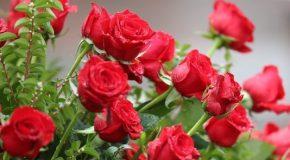 Des fleurs, des roses surtout et une douce musique