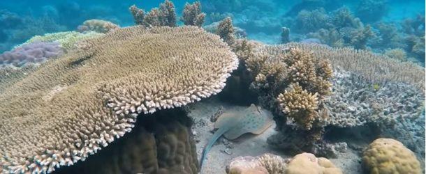 La biodiversité océanique, une découverte qui vaut le détour!