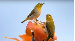 Merveilleuse présentation avec des clichés d'oiseaux et de fleurs