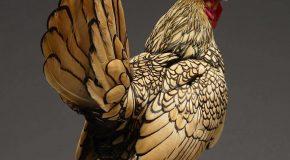 Deux amis de Milan en Italie capturent la beauté des poules et c'est un super projet!