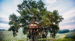 Une jolie cabane dans un arbre, au milieu d'un champ de lavandes