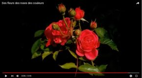 Les fleurs font chaud au cœur, les couleurs de la nature aussi!