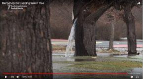 Une fontaine naturelle au milieu d'un arbre, c'est phénoménal!