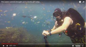 Un nageur se balade au milieu d'un océan de déchets plastiques