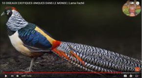 Oiseaux très rares qui risquent de ne plus exister, c'est beau et malheureux!