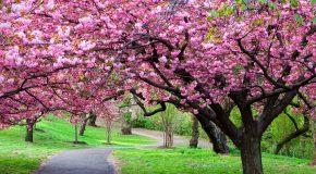 Bientôt le printemps, mais les fleurs sont déjà là avec la musique d'André Rieu