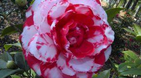 Les plus belles fleurs en musique, un ppt très agréable à voir!