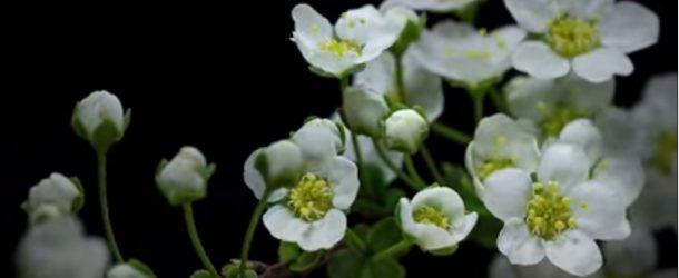 Timelapse en macro de quelques végétaux qui poussent, c'est beau!
