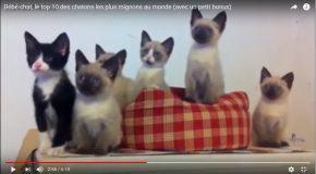 Des chatons dans des scènes toutes belles