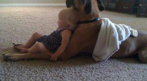 Les enfants, les meilleurs amis des chiens!