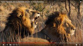Safari en Afrique, c'est très agréable et c'est une belle découverte!