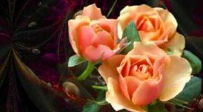 Les fleurs de l'âme, un poème en musique et en fleurs!