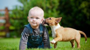Bébés et chiens, du rire et de la joie à gogo!