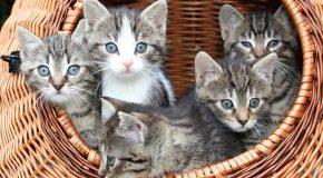 10  avantages d'avoir un chat à la maison, c'est très intéressant!