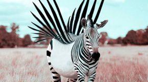 Les superbes créations surréalistes de Julien Tabet