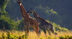 La faune, dans des clichés offerts par un photographe très talentueux!