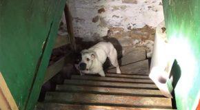 En achetant leur nouvelle maison, ils trouvent un chien au sous-sol