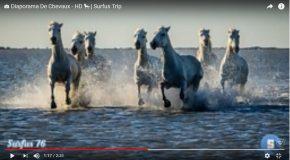 La beauté et la force du cheval dans une série de clichés en musique