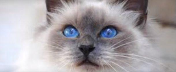 Zoom sur les chats, ce sont d'adorables animaux aux yeux comme des perles!