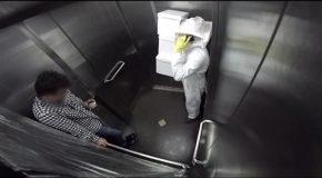 Des abeilles dans un ascenseur