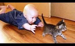 Quand les chats et les bébés s'amusent