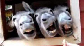 Top 10 des animaux les plus drôles