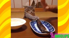 L'humour des chats