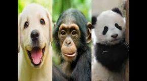 Les plus belles citations sur les animaux