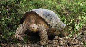 Ces animaux qui vivent le plus longtemps au monde
