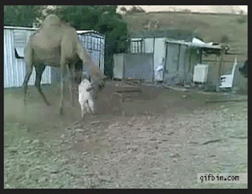 Ces animaux sont vraiment cinglés mais ils nous font bien rire