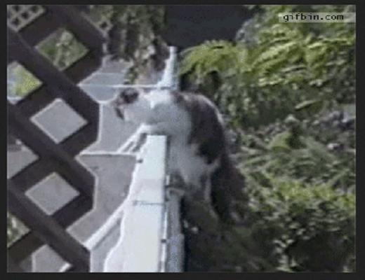 Ces chats sont vraiment débiles et se mettent dans des situations incroyables