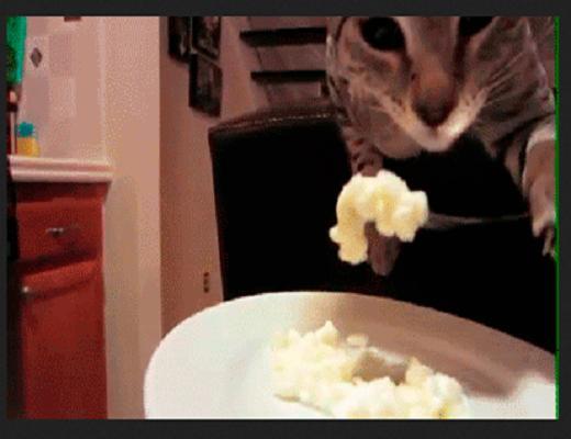 Qui avait osé dire que les chats ne savaient pas bien se tenir