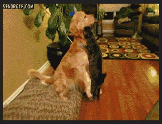 Quand le chat rencontre les autres animaux, il s'en donne à cœur joie