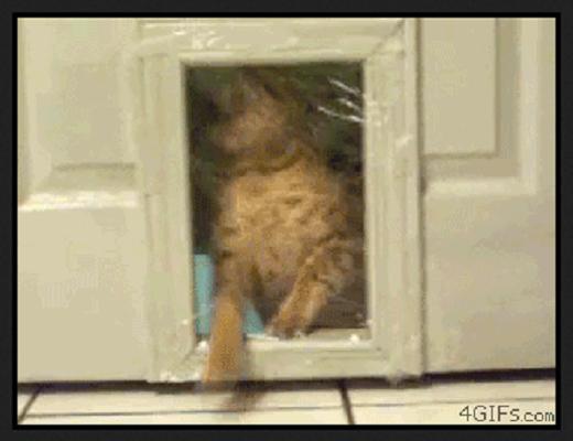 Voilà des chats qui ne sont vraiment pas très adroits