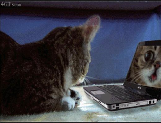Les chats ont bien évolués, ils savent faire beaucoup de choses impressionnantes