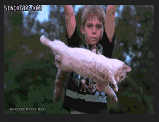 Les chats savent vraiment se servir de la force de l'apesanteur