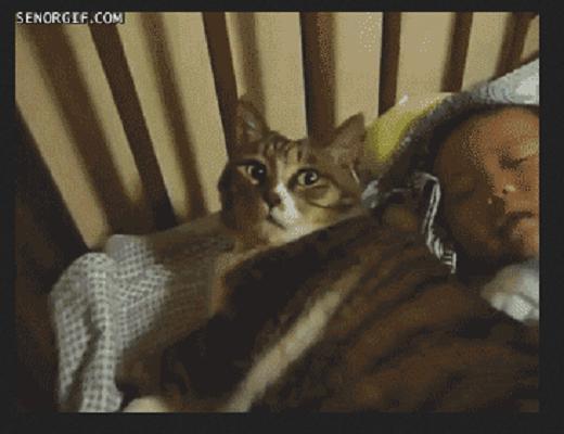 Les chats et les humains ne demandent qu'un peu d'affection