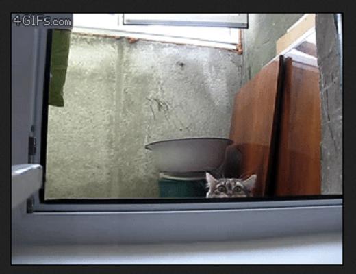 Ces chats sont si adorables et mignons qu'on ne pourrait cesser de les regarder