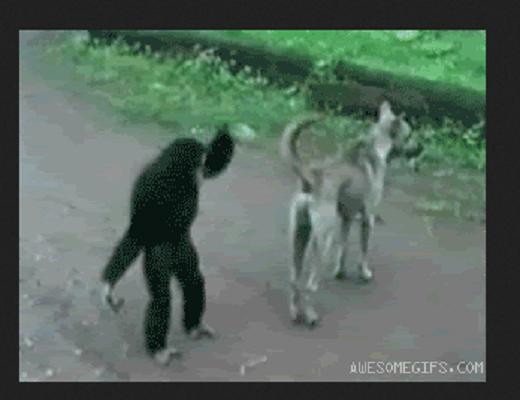 Les singes de gros farceurs et aiment faire les pitres avec les humains et les autres animaux