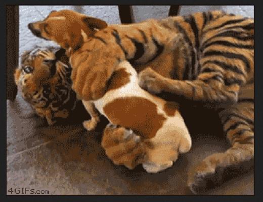 Certains animaux ont tendance à faire des choses incroyables et surprenantes