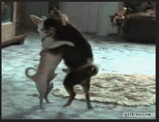 Des chiens qui savent bien bouger sur deux pattes, de vrais danseurs professionnels