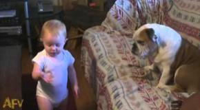 Un bébé donne une bonne leçon de moral à son chien trop fainéant!